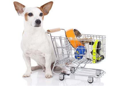 puppy supplies cheap why and where to shop for wholesale pet supplies top tips