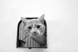 how to to use pet door great tips and tricks on how to your cat to use a pet door