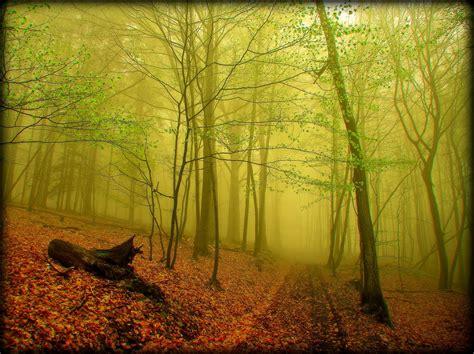 imagenes verdes naturales banco de im 225 genes para ver disfrutar y compartir 24
