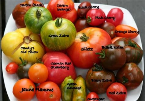 tips  growing tomatoes  containers  pots home