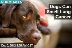 dogs smell cancer lung cancer news stories about lung cancer page 1 newser