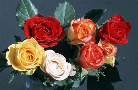 fiori per sfondi foto gratis per sfondi