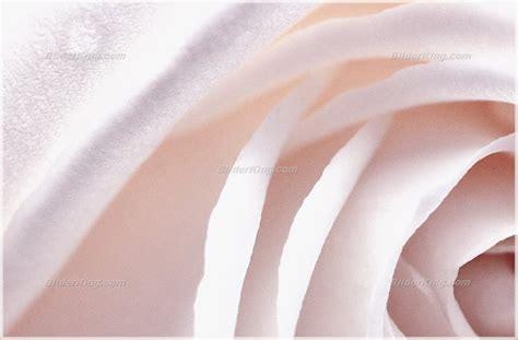 wandbild dyrell altrosa wandbilder - Wandbild Altrosa