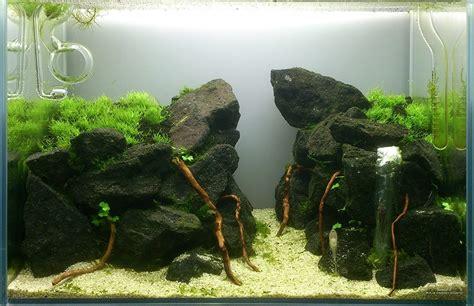 Aquarium Inrichting Ideeen by Inspiratie Voor Het Inrichten Je Aquarium Nodig