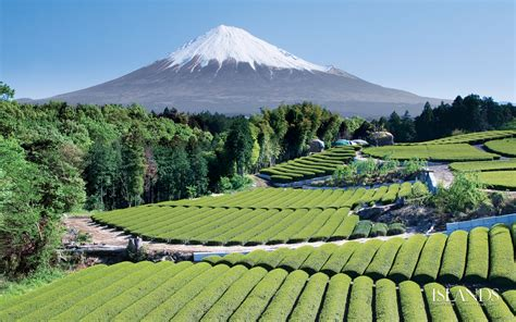 wallpaper free japan 1080p hd japan wallpapers for free download the