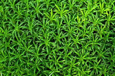 Green Plants by Green Plant Wallpaper Free Stock Photo Domain