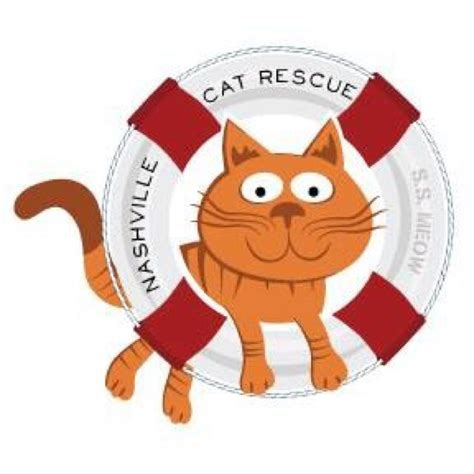 nashville rescue nashville cat rescue on quot my foster family wants to make sure we all end up in