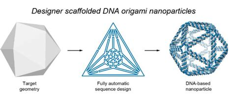 Dna Origami Software - top design brings new dna structures to