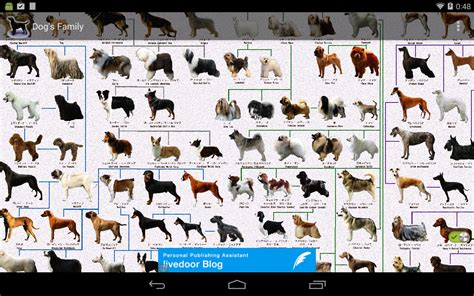 types of dogs chart breed chart