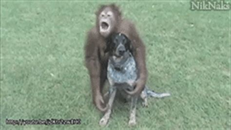 new year monkey animated gif gif find on giphy