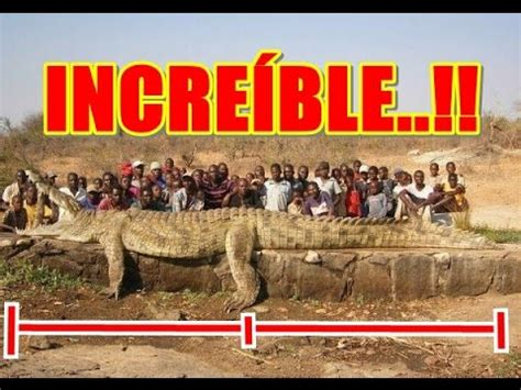 imagenes sorprendentes de animales gigantes los animales m 225 s grandes del mundo 2015 animales grandes