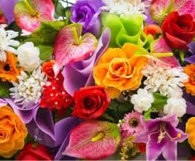 les initi 233 s la beaut 233 des fleurs