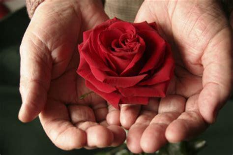 donare un fiore donare 232 la cosa pi 249 i ragazzi di sessant anni