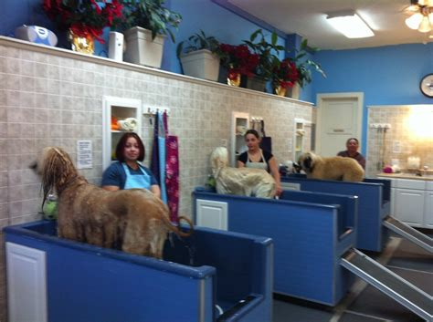 dawg house dawg house pet spa closed 19 photos 104 reviews pet groomers 1658 el camino