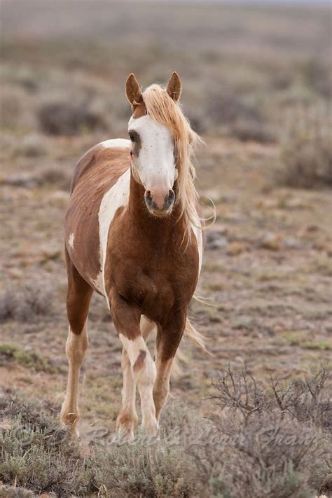 white mustang horse 9452 best images about heart of a horse on pinterest