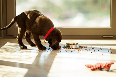 difference between puppy food and food what s the difference between food and puppy food 171 laurelwood animal