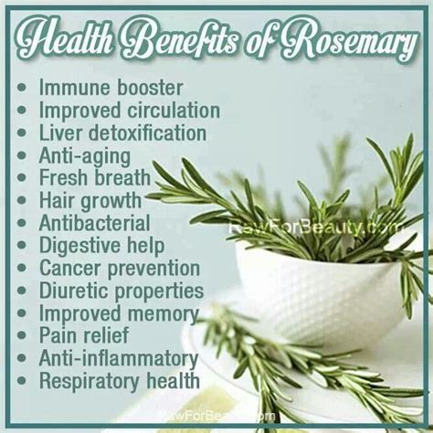 Medicinalcosmetic Uses Of Rosemary health benefits of rosemary healthy living