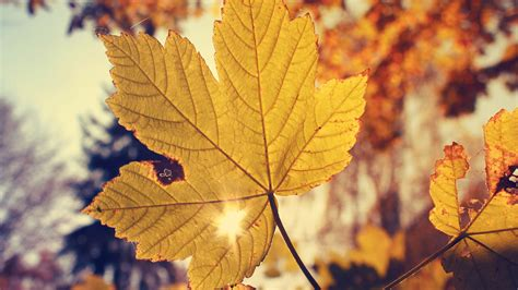 wallpaper tumblr autumn autumn wallpaper tumblr wallpaper 1226053