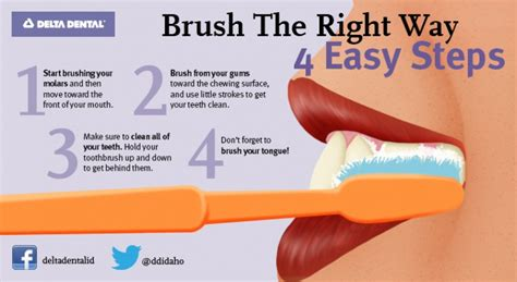 4 steps to brushing the right way delta dental of idaho
