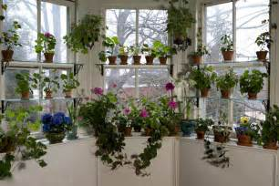 Indoor Window Garden by Seven Ways To Beautiful Houseplants