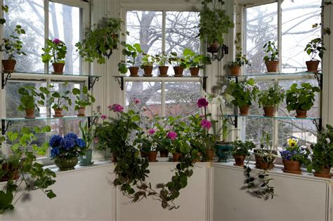ways  beautiful houseplants