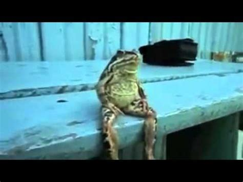 Sitting Frog Meme - a frog sitting on a bench like a human by kalbe121 meme