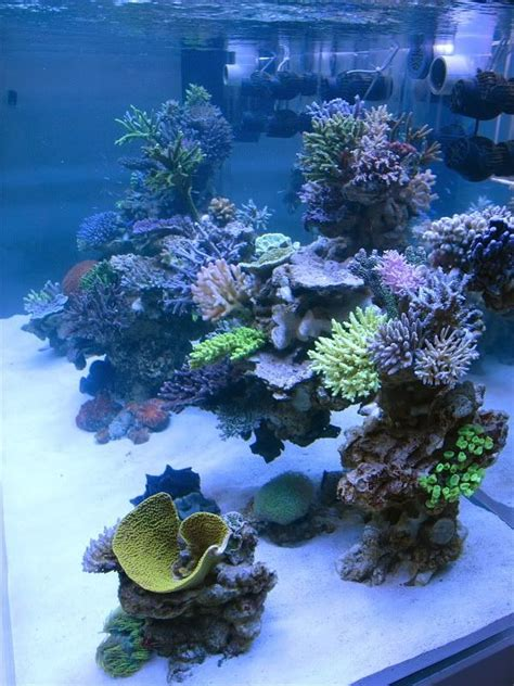 aquascapes online 123 best images about aquarium ideas on pinterest online