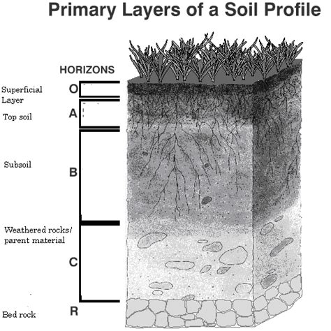 soil horizons diagram soil profile diagram without label pictures to pin on