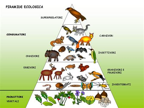 la catena alimentare degli animali due buoni motivi per diventare vegetariani di alberto