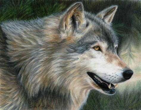 Vans Wolf Original wolf timber wolf original artwork by carla kurt draw