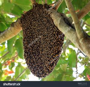 Beehive on a tree clipart black and white clipartsgram com