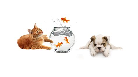 puppy fish cat fish
