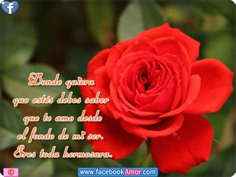 imagenes de rosas rojas con frases bonitas imagenes d rosas bellas imagui