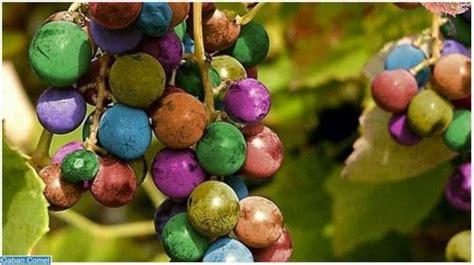 Hanger 18 Era Putih Dewasa anggur luar biasa berwarna warni zamrispoon