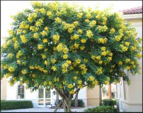 crape myrtle colors crape myrtle tree guides and care