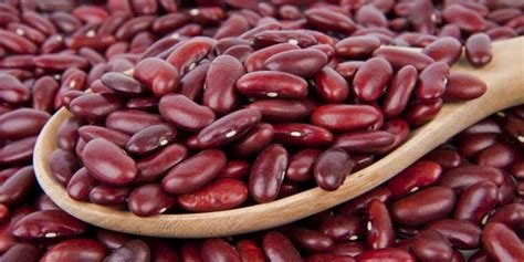 kacang kacangan kaya  gizi protein  tinggi