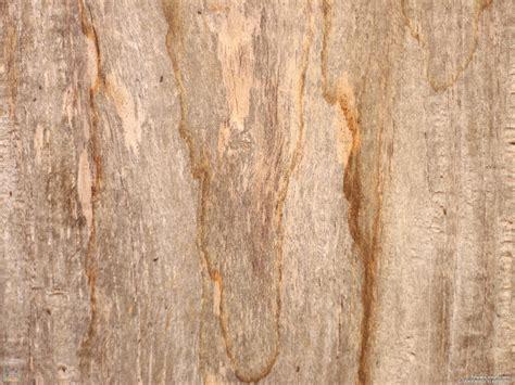 wallpaper kayu kedai joy studio design gallery photo