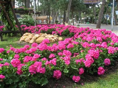 giardini in fiore nel mondo di krilu cervia citt 224 giardino maggio in