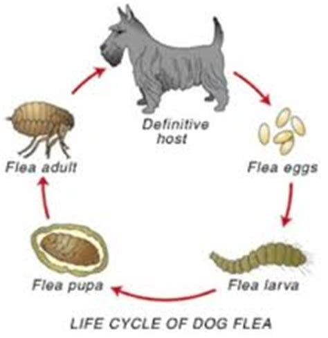 where do dogs come from curing fleas ticks and worms featured dogits