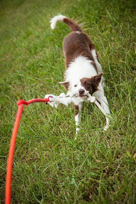 backyard dog toys tether tug keeps your pup entertained dog living