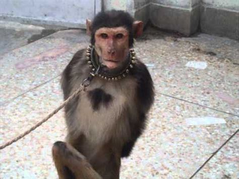 monky man new funny pictures funny monkey man pictures