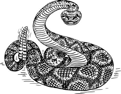 rattlesnake clipart png rattlesnake transparent rattlesnake png images pluspng