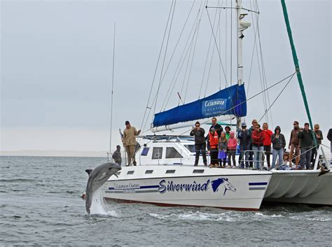 catamaran charters namibia catamaran charters marine big 5 sightings in walvis bay