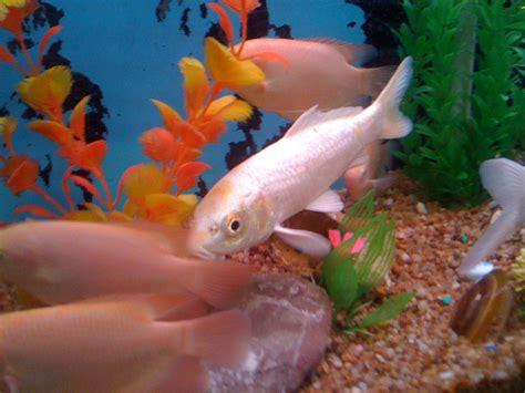 types of aquarium fish all types of aquarium fish www imgkid the image
