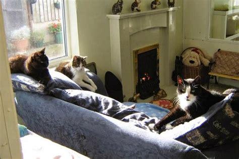 consolato spagnolo venezia in inghilterra c 232 l albergo per i gatti in pensione