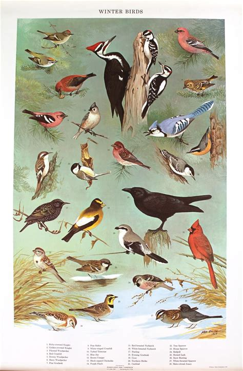 igavel auctions four bird species posters pennsylvania