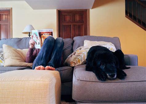 cani in appartamento cani da appartamento le 5 razze perfette per vivere in