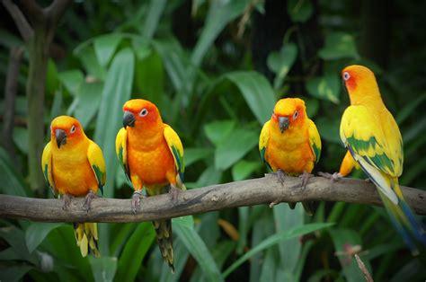 google images birds images google images best google images love birds