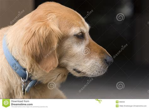 puppy profile in profile royalty free stock photo image 868325