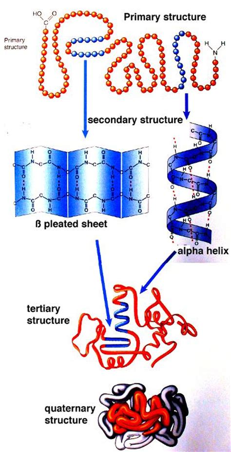 t protein ur random proteins perform many functions